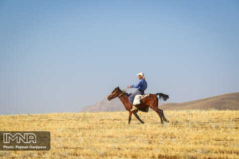 برداشت محصول در مزارع پشتکوه فریدن