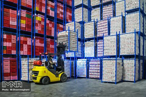 واردات موز منوط به صادرات سیب شود