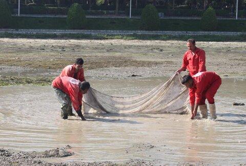نجات ماهیان گرفتار در رودخانه زایندهرود