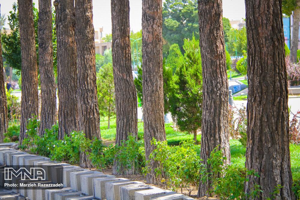 آغاز طرح مبارزه با آفات درختان در آستارا