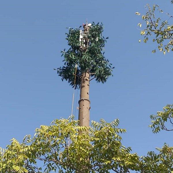 نصب دومین دکل درختی مخابراتی در مشهد