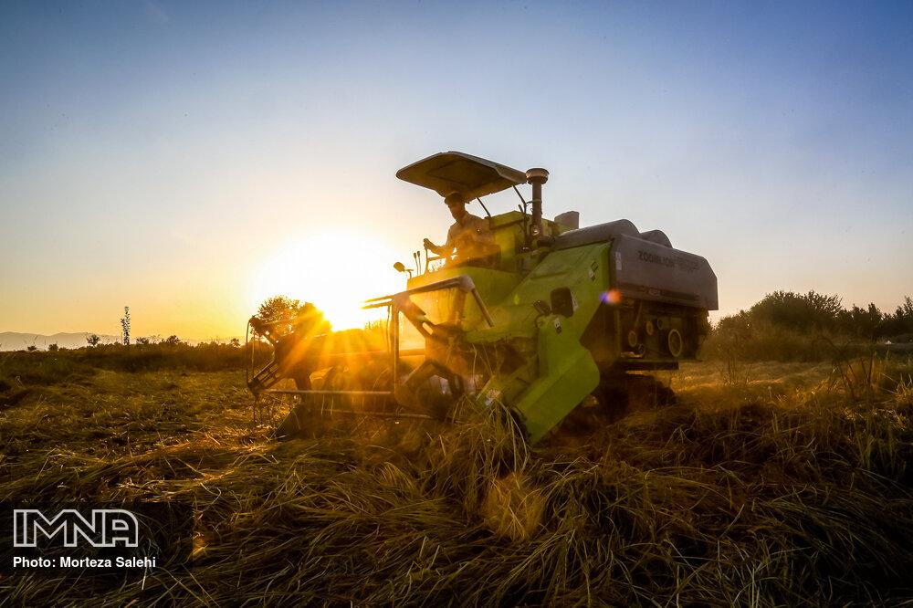 تغییرات قیمت برنج، شکر و گوشت در آذرماه نسبت به پارسال+ جزئیات
