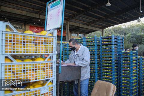 بازار میوه و ترهبار در مسکن مهر گلپایگان راهاندازی میشود