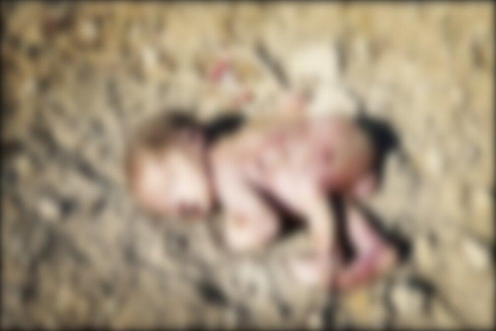 بررسی مورد نوزاد رهاشده حصه در شورای شهر
