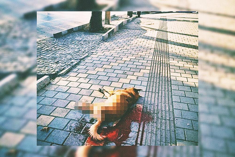 ماجرای کشتن سگهای بیصاحب در همدان+جزئیات و واکنشها