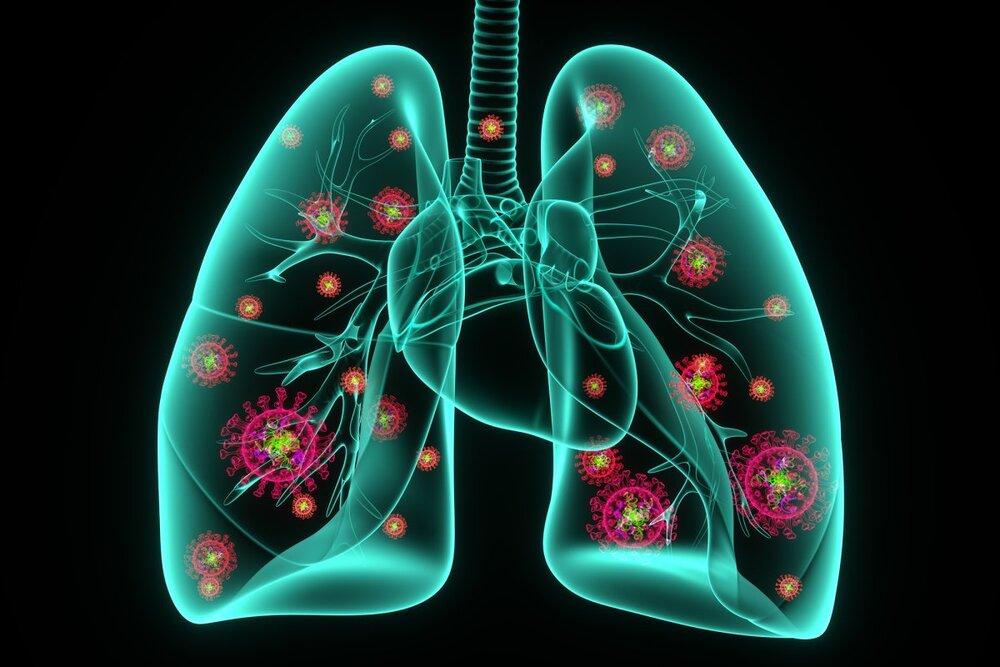 محافظان خوراکی ریهها/خواص تغذیهای لبو را بشناسید