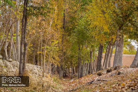پاییز هزار رنگ ناژوان