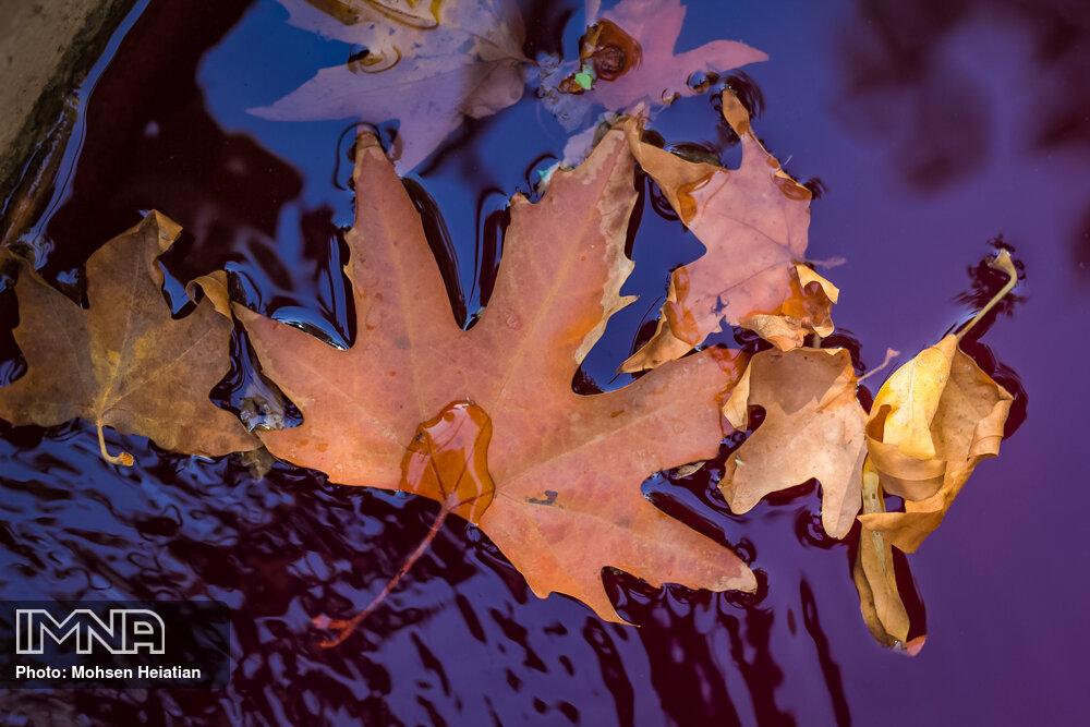 Isfahan's autumn festival to go online