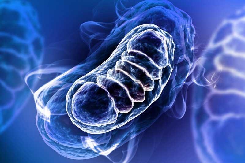 اثر مخرب استرس اکسیداتیو بر بدن چیست؟