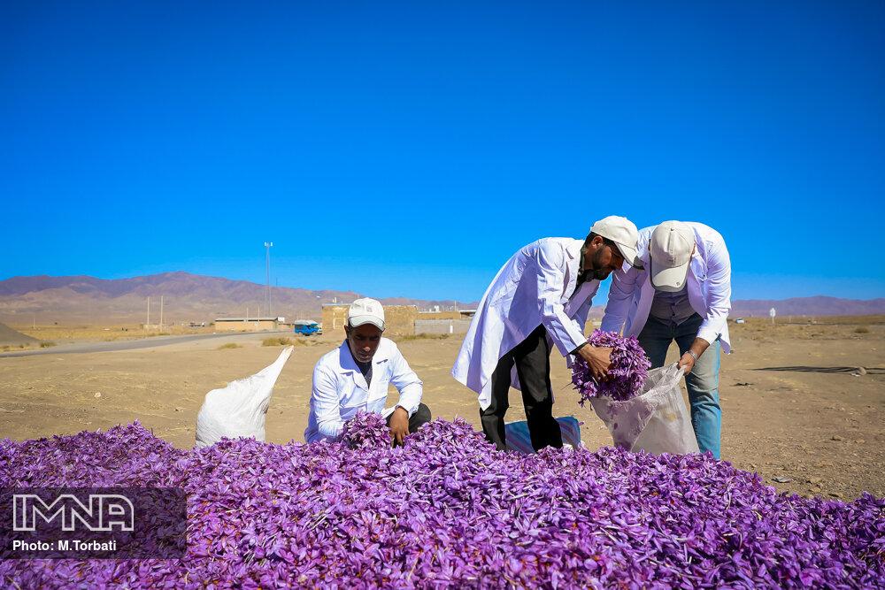 صادرات ۱۱۷.۵ میلیون دلاری زعفران در هشت ماه