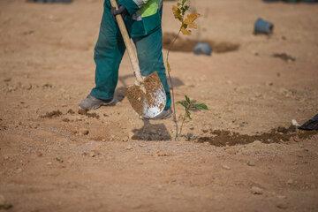 کاشت نمادین ٤٠ اصله درخت به یاد شهدا