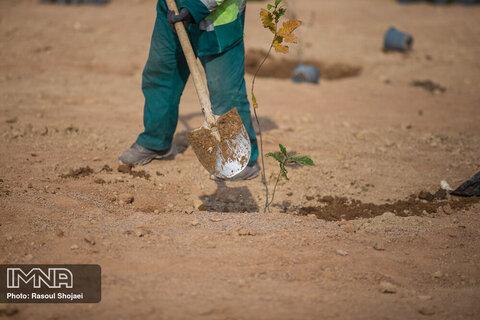 کاشت بیش از ۵۰۰  بوته گل، درخت و درختچه در سبزوار