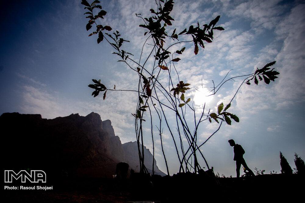 کاشت بیش از ۵ هزار درخت و درختچه در پروژه سردار شهید سلیمانی