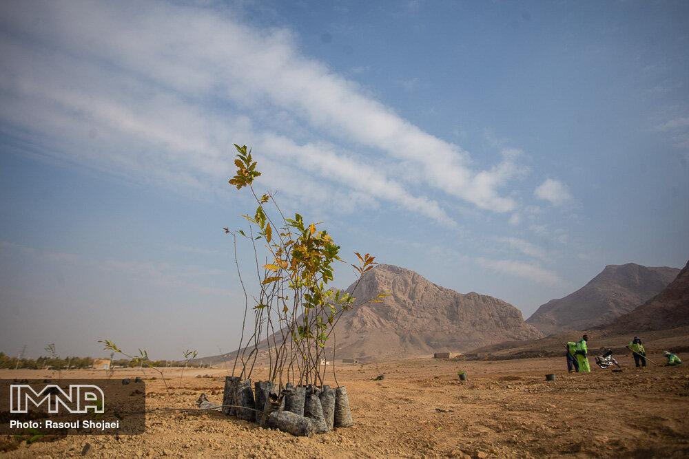 کاشت ۲۰۰ اصله نهال در ماسوله