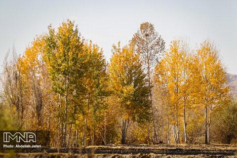 Golden autumn in Mobarake
