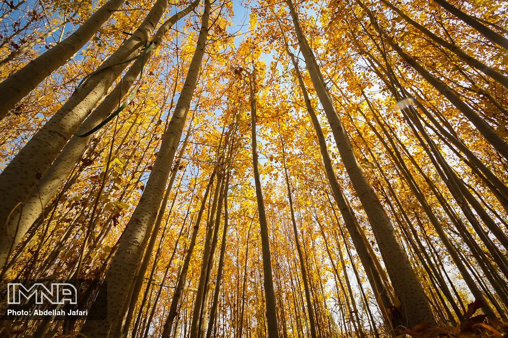 طبیعت پاییزی مبارکه