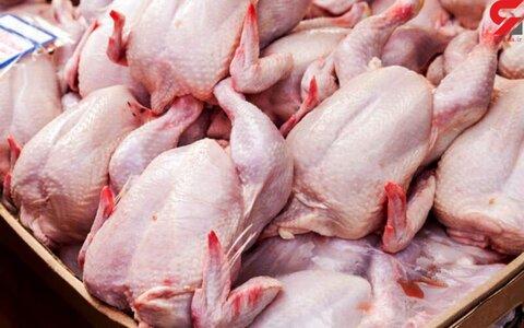 توقیف ۲۰ هزار کیلو مرغ زنده در کاشان