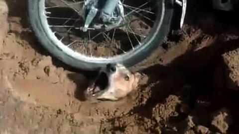 فیلم دلخراش از لحظه حیوان آزاری در بوشهر / مرد بی رحم بازداشت شد