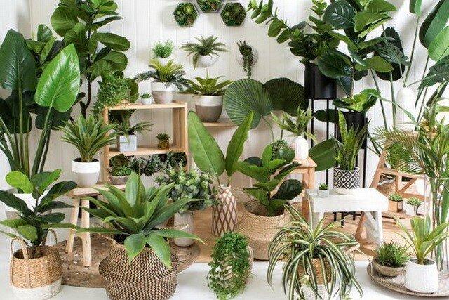 بهترین گیاهان برای کاهش آلودگی هوای خانه