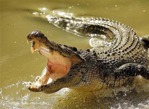 تمساح دریاچه چیتگر پیدا شد! +عکس