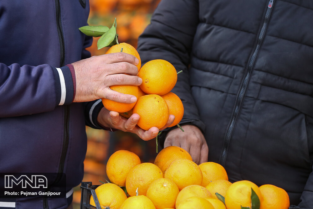 بازار میوه شب یلدا