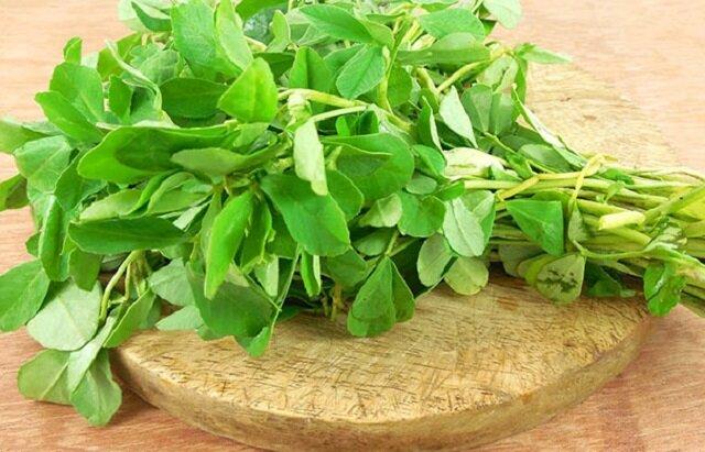 خواص دارویی گیاه شنبلیله چیست؟