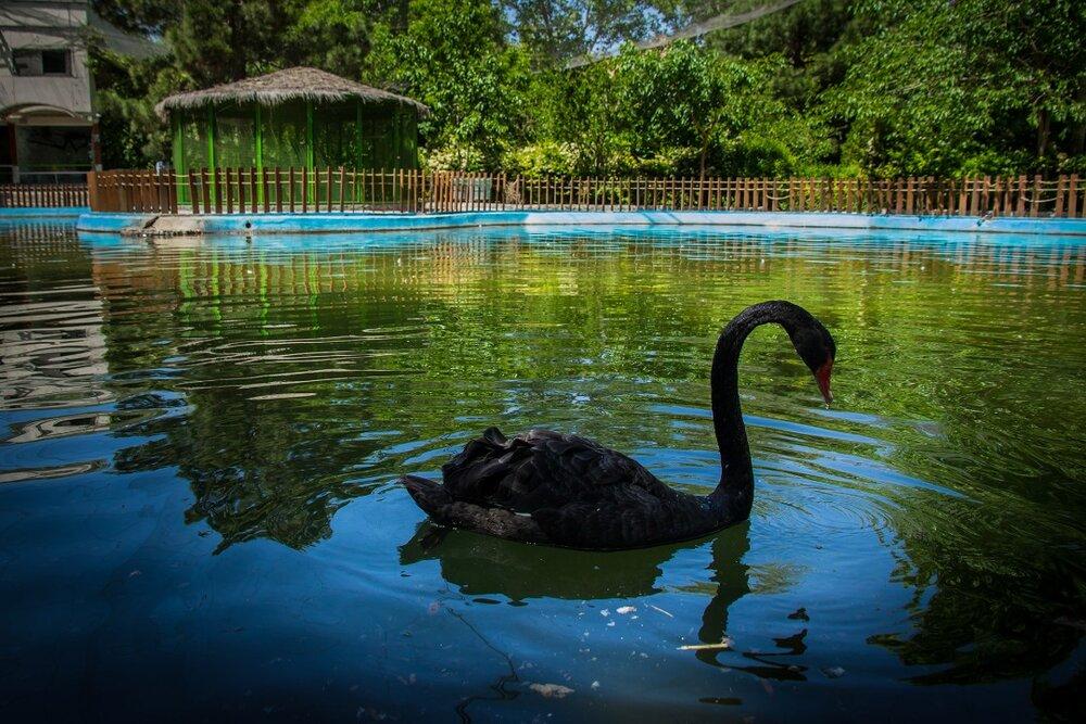 برگزاری وبینار تخصصی آشنایی با پرندگان خانگی