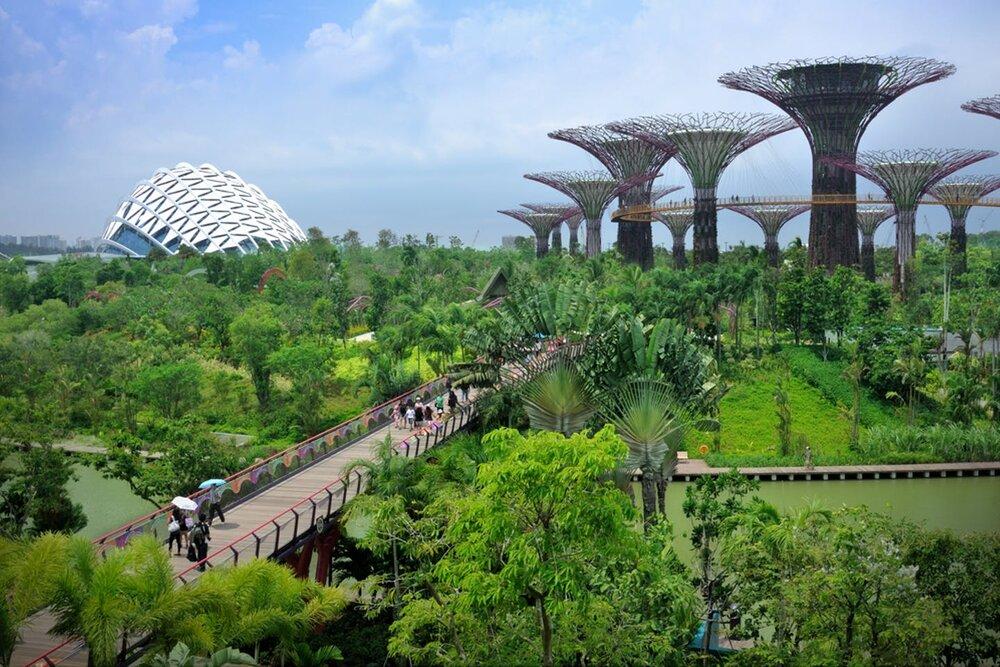 نقش پوشش سبز در افزایش پایداری و تنوع زیستی شهرها