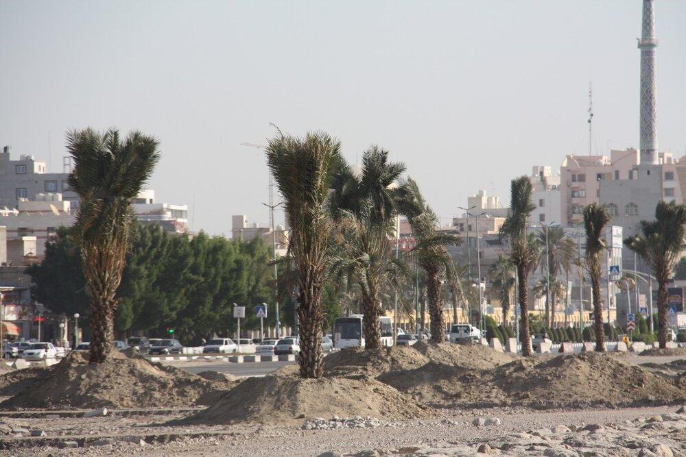 اجرای فاز نخست کاشت درختان نخل در بلوار ساحلی بندرعباس