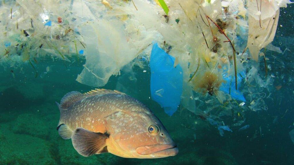 کدام غذاهای دریایی بیشترین مقدار میکروپلاستیک را دارد؟