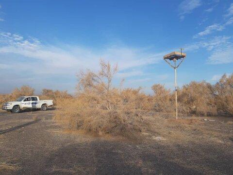۳ جایگاه آشیانهسازی پرندگان شکاری در ورزنه نصب شد