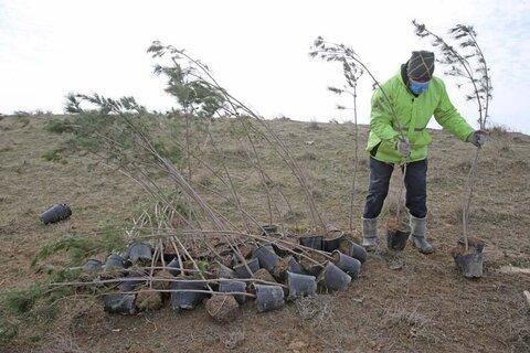 درختکاری در ۲۰۰ هکتار از اراضی مرکز حلقه دره