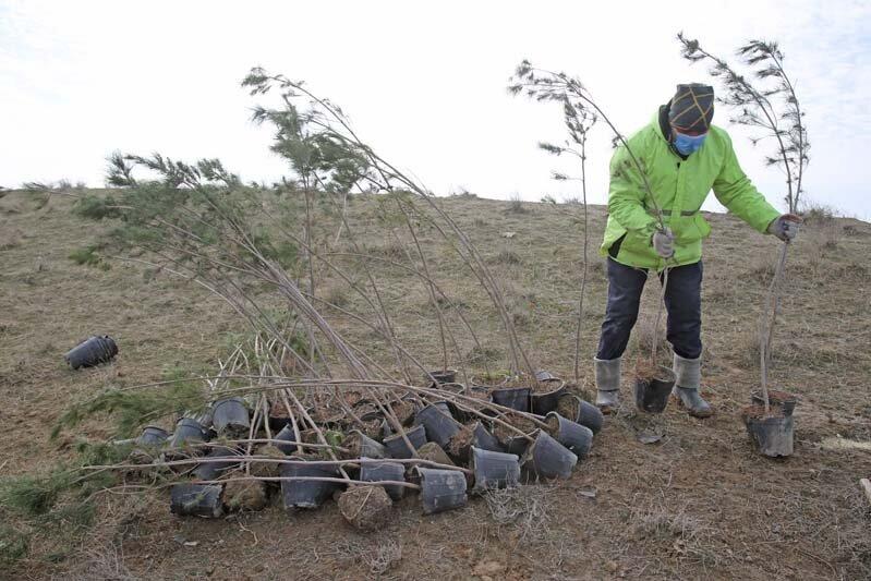 غرس ۵ هزار اصله نهال در پارکهای جنگلی سنندج