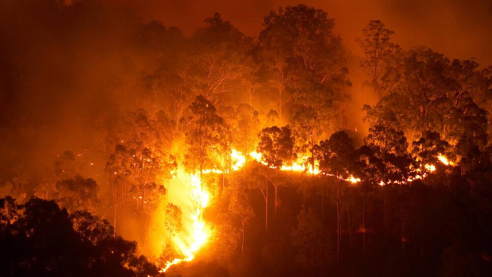وجود خطر آتشسوزی در جنگلها علیرغم کاهش بارش در سال جاری