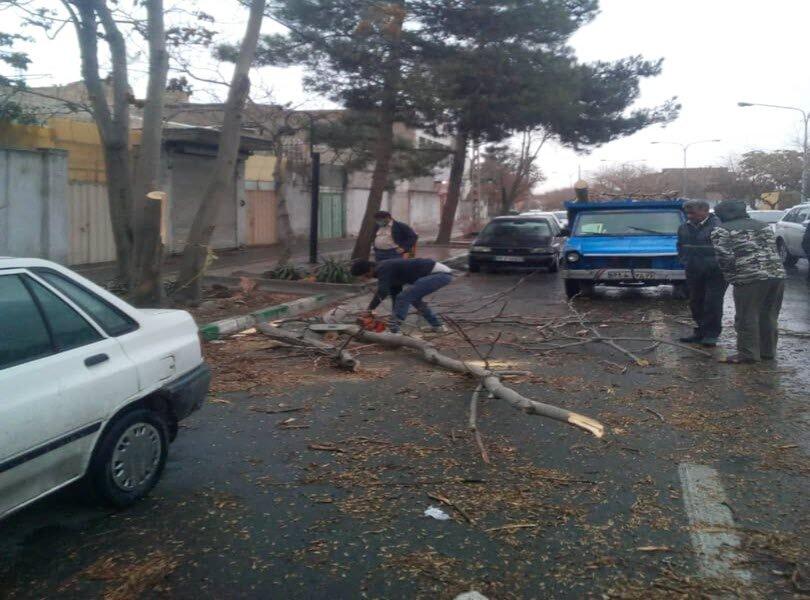 شکستگی ۵۵ اصله درخت در پی وزش شدید باد در مشهد