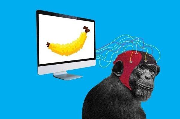 میمونها اجرای بازیهای ویدئویی را یاد گرفتند
