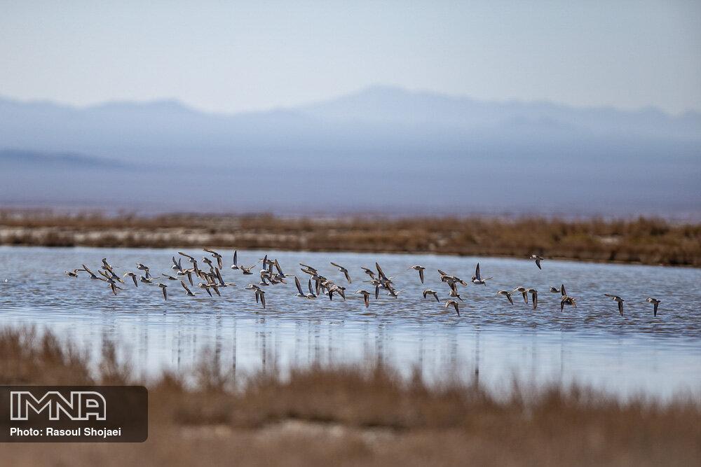 محاسبه حجم آب تالابهای ایران برای نخستین بار
