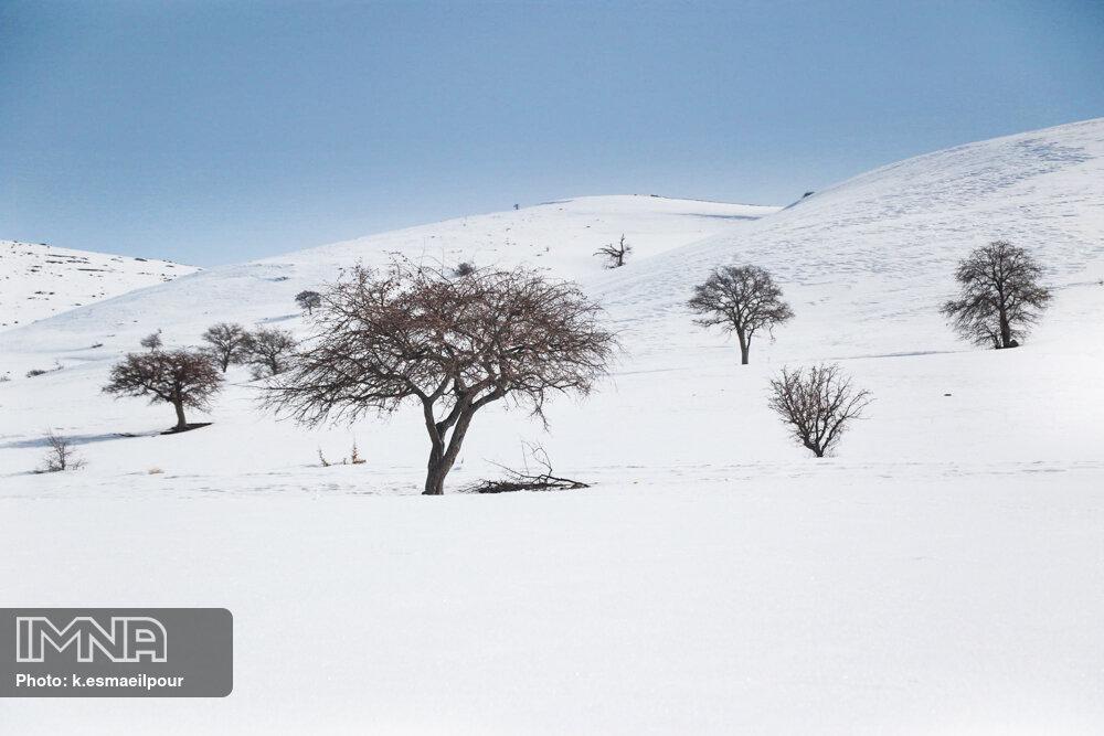 طبیعت زیبای برفی روستای توتخانه