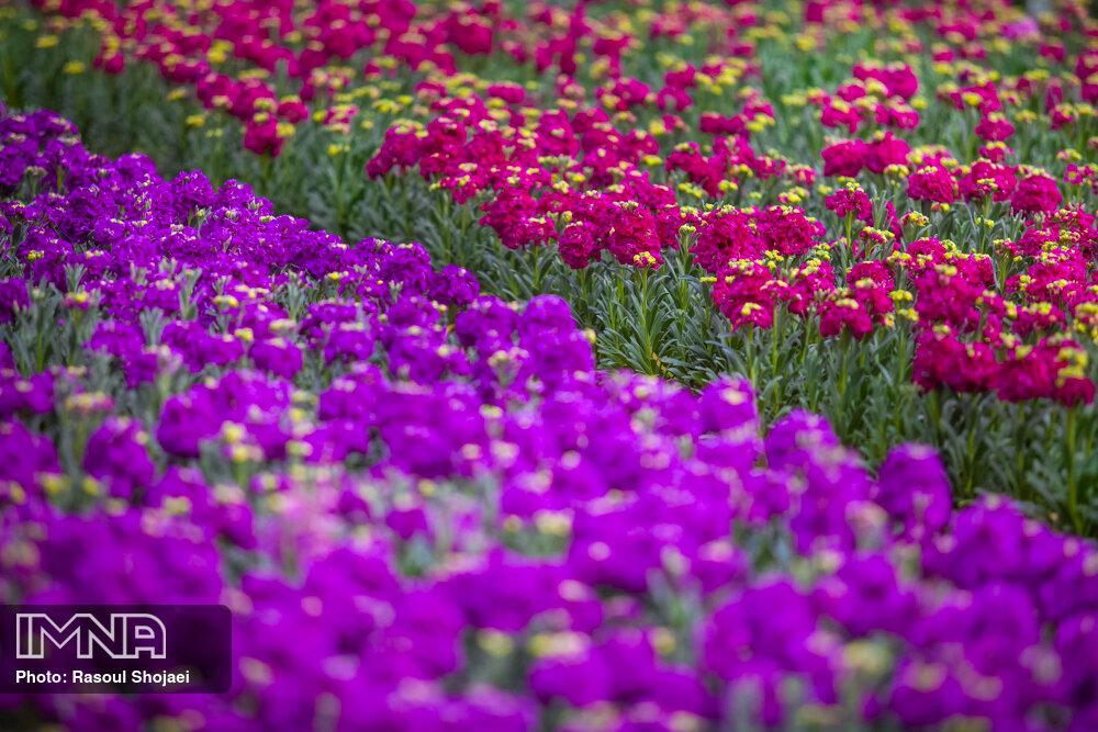 کاشت ۵ میلیون بوته انواع گل در شهر ارومیه
