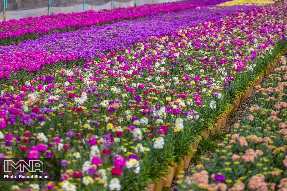 کاشت ۱۸ هزار جعبه گل در سقز