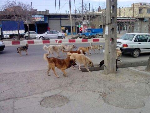 آمادهسازی نخستین پناهگاه سگهای بلاصاحب در آمل 
