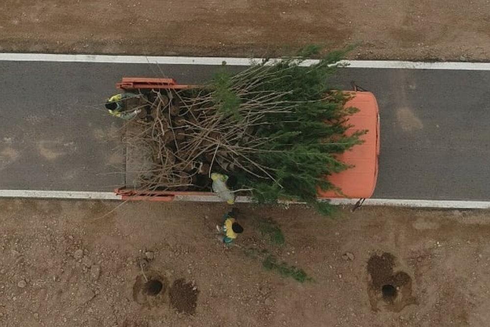 درختکاری در مسیر جاده سلامت یزد