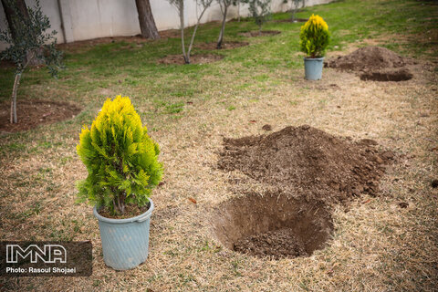 کاشت یک هکتار درخت در محور شهید رمضانی شیراز