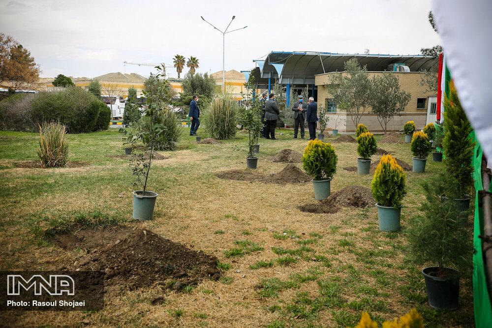 توسعه درختکاری حاشیه بزرگراه آیتالله بروجردی قم