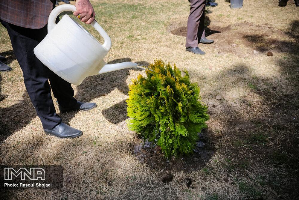کاشت ۳۰۰ اصله درخت در تالاب حاجی آباد لاهیجان