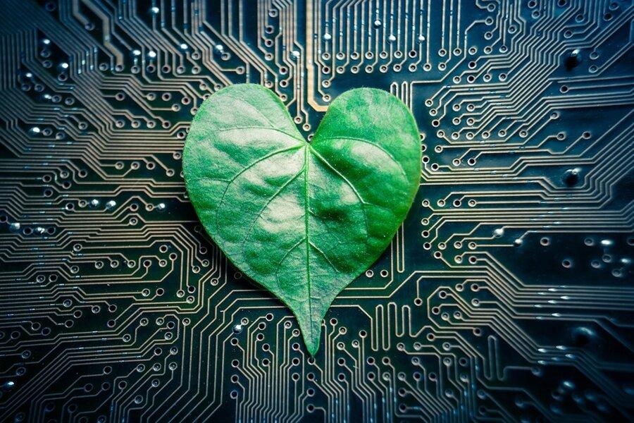 مدیریت الکترونیک درختان در پرتغال با کاشت ریزتراشه
