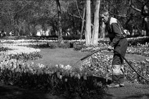 Isfahan takes advantage of wastewater irrigating green spaces