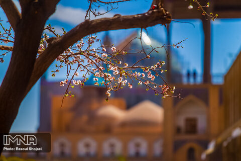 Blossoms popping up in Isfahan