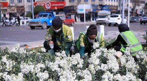 پیشرفت ۷۰ درصدی کاشت گلهای استقبال از بهار ۱۴۰۰ در مشهد