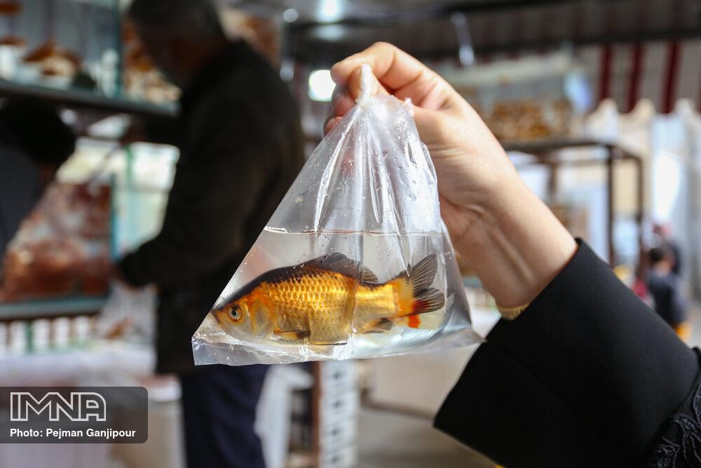 سیستم ایمنی ماهی!